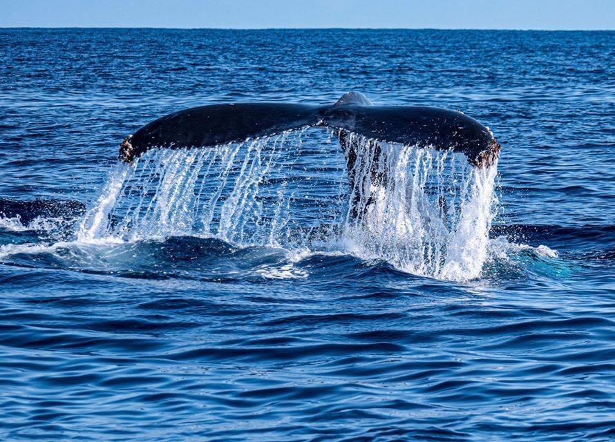 Dans le lagon de l'Hôtel Salary Bay, Une baleine à bosse