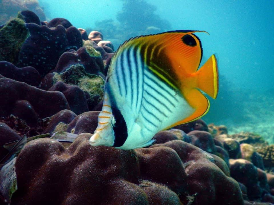Les merveilles des fonds sous marins